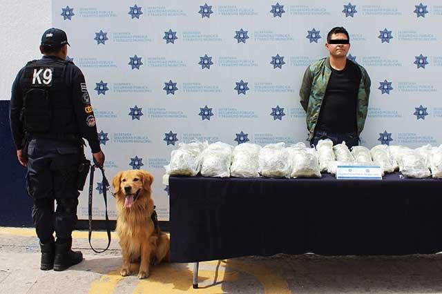 Aseguran en la CAPU 31 kilos de mariguana y hay un detenido