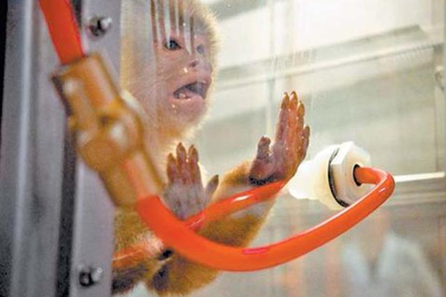 VW suspende a un ejecutivo por experimentos con monos y humanos