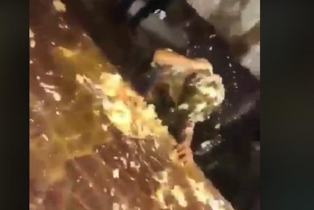 VIDEO Huevos y trozos de pastel le llovieron a niño en su fiesta