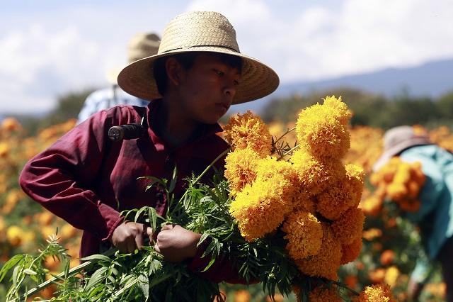 Abrir panteones para no dañar a floricultores, pide diputado