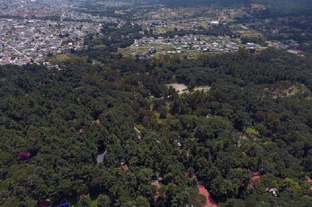 Advierten riesgo de extinción en 1,200 hectáreas de Flor del Bosque