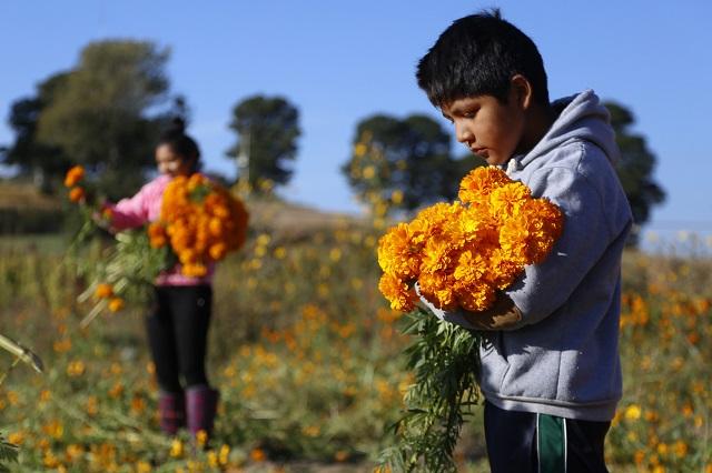 Por cierre de panteones peligran ventas de flor de muerto en Atlixco