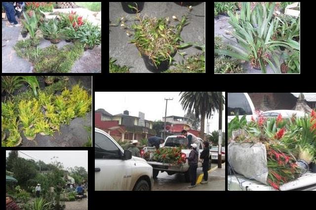 Detectan venta de flora silvestre protegida, en Tenango