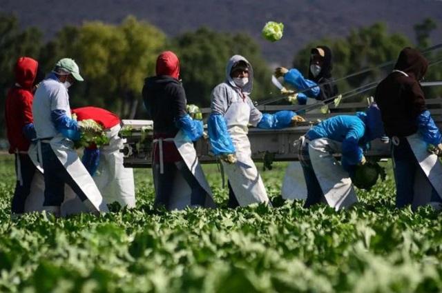 Piden vacunas para trabajadores del sector agroalimentario