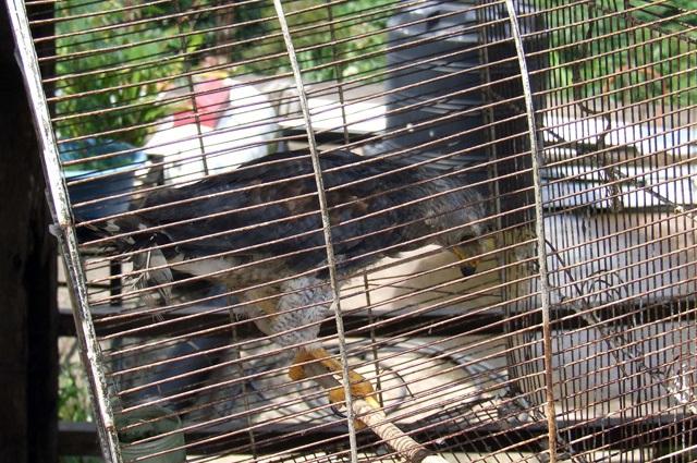 Buscan combatir el comercio de animales exóticos en internet