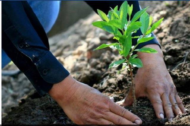Plantarán árboles en Puebla contra CO2 generado por desechos sólidos
