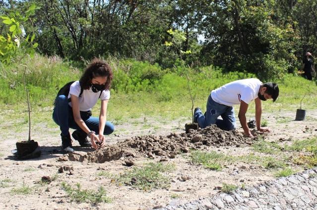 Inician campaña de reforestación en Haras Ciudad Ecológica