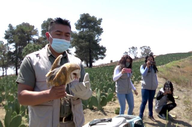 Unidad de manejo ambiental BUAP reintegra aves a su hábitat