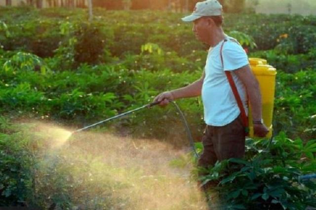 Sedena usó glifosato en viveros del programa Sembrando Vida