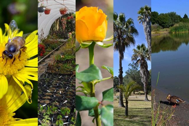 Conmemora la BUAP el Día Nacional de los Jardines Botánicos