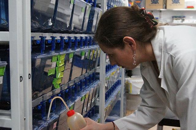 Egresa de la BUAP y hace investigación médica en Reino Unido y en Canadá