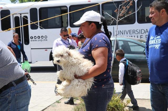 Semana Nacional de Vacunación Antirrábica Canina y Felina