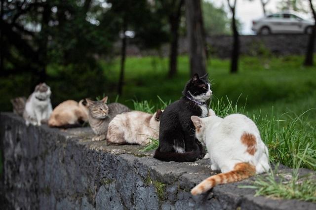 Gatos o gatijos, la compañía ideal en tiempos modernos
