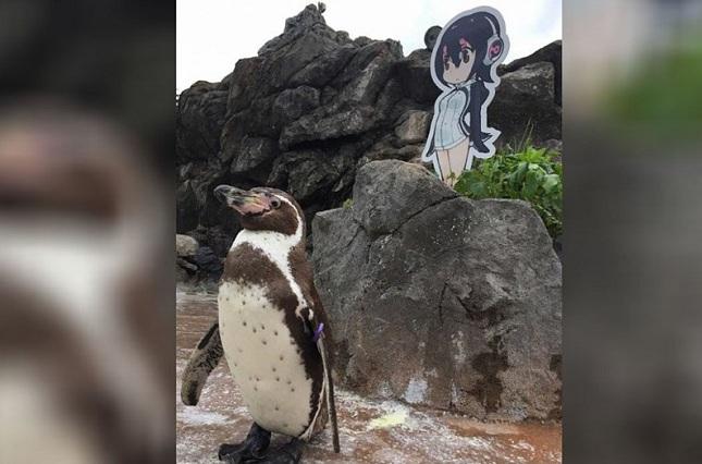 Japón llora la muerte de un pingüino