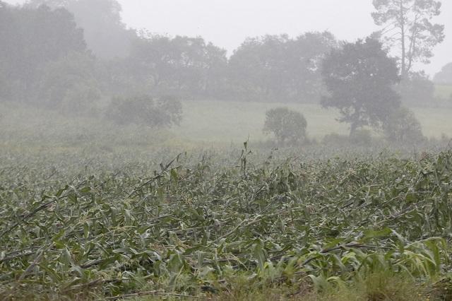 Apoyan a campesinos de Tehuacán por pérdida de cultivos de maíz