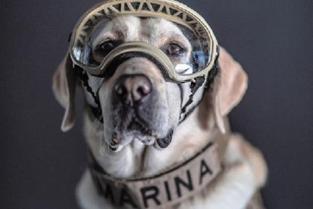 Perritos rescatistas de la Marina son retratados por Santiago Arau