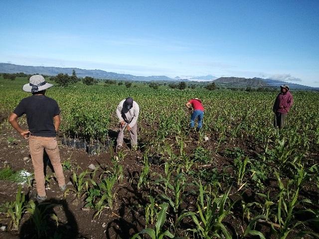 Granjas Carroll dona 2 mil árboles frutales a comunidades de 4 municipios