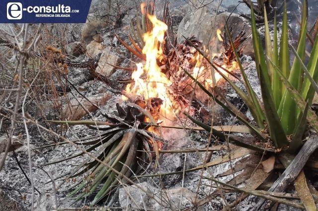 Tiene la Reserva de la biosfera 50 hectáreas afectadas por incendios
