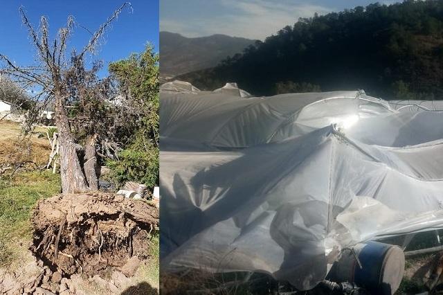 Fuertes vientos se llevan techos de 800 casas al norte de Puebla