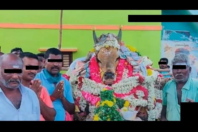 Pueblo en la India ignora cuarentena para asistir a funeral de un toro