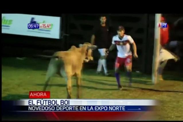 Juegan futbol y meten una vaca al terreno para darle emoción