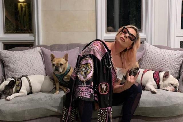 Lady Gaga ofrece 500 mil dólares por rescate de sus perros