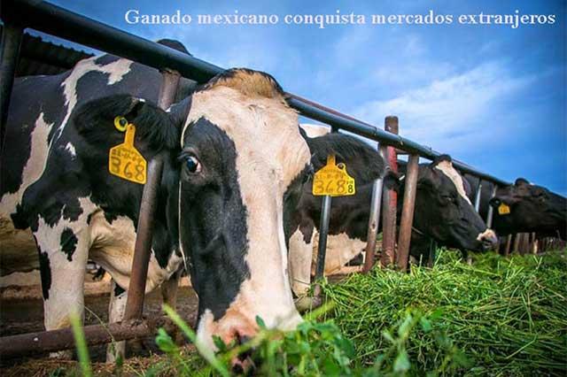 Incrementa la exportación de ganado de México a Estados Unidos