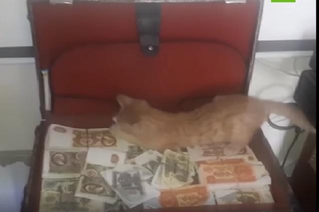 Captan a gata robando dinero de maletín