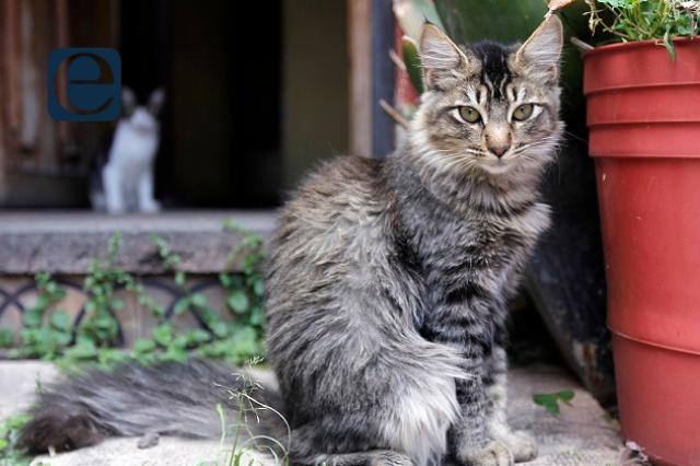 Gatito sobrevive a la tragedia del metro