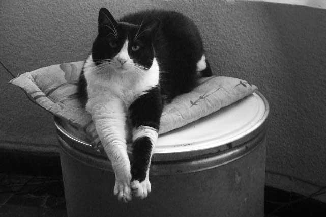 Comunícate con tu minino: Experta descifra el lenguaje corporal de los Gatos