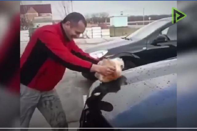 Indigna video de hombre que limpia su auto con un gato