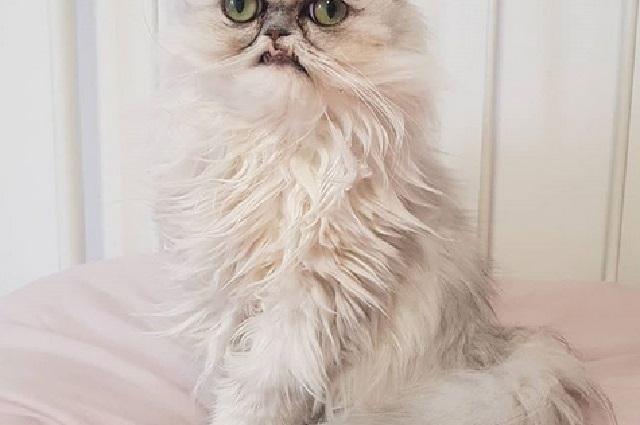 ¿El gato más terrorífico de la historia? Mira sus fotos
