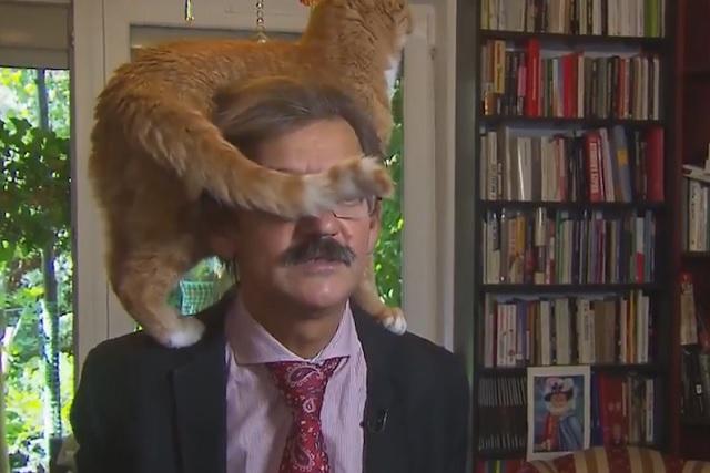 """Este gato se """"coló"""" en una entrevista y se robó toda la atención"""
