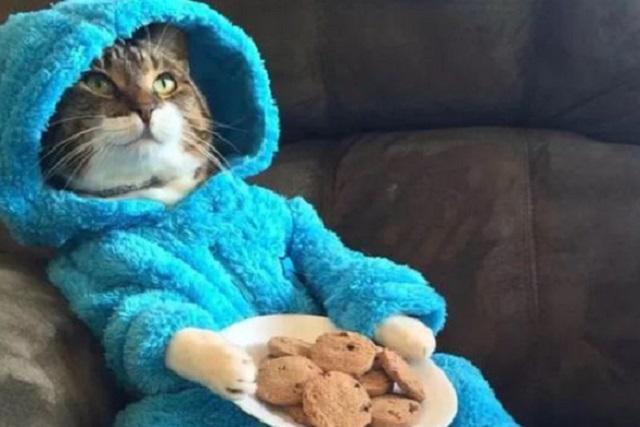 La embajada de EU en Australia se equivocó e invitó a una fiesta de gatos