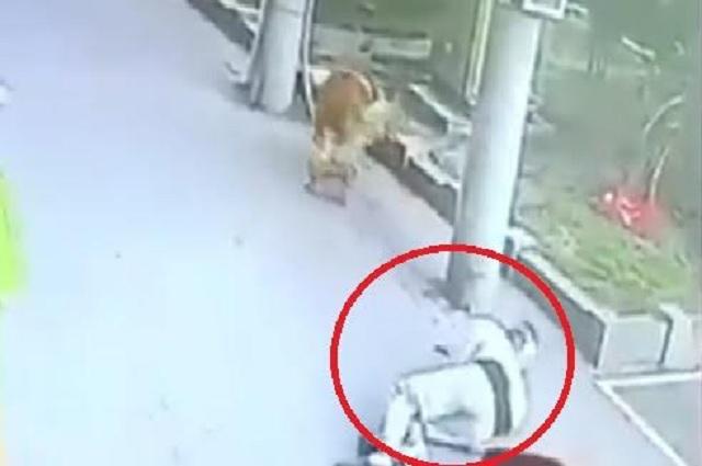 Cae gato sobre cabeza de transeúnte; lo deja inconsciente