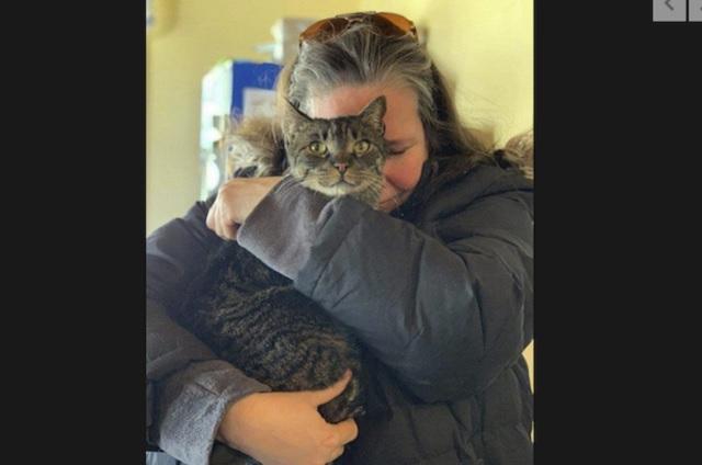 Gato se va de su casa y regresa cinco años después