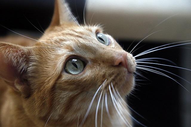 Vecinos denuncian fiesta escandalosa y policía halla a gato oyendo música