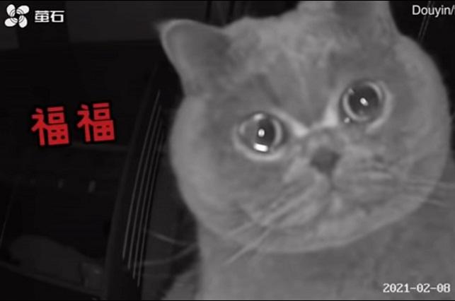 Viral: Gatito enternece la web con sus lágrimas al quedarse sólo