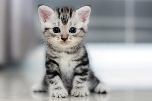 10 cosas que puedes aprender de los gatos para ser más feliz