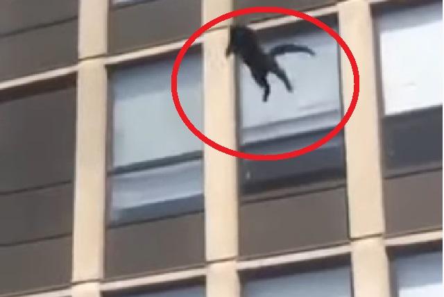 Video: Gato salta del quinto piso de un edificio en llamas y cae de pie