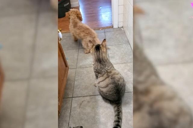 Viral: Perro pequeño no puede con gato y va por ayuda