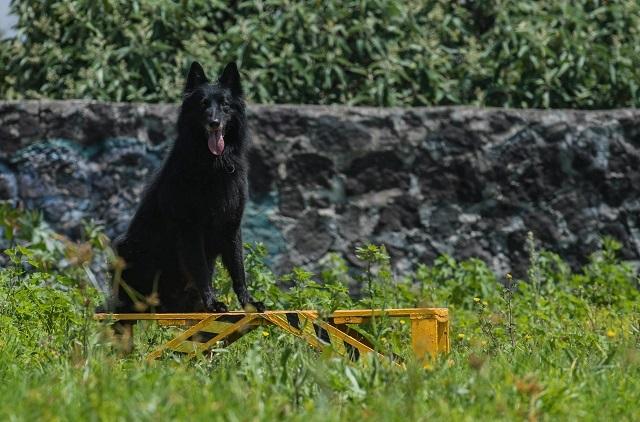 Conoce a Geri, un perro de rescate entrenado en la UNAM