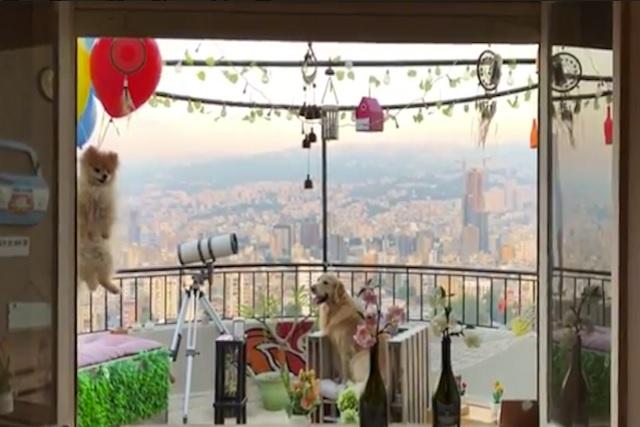 Le ponen globos a un perrito ¡y lo hacen volar!