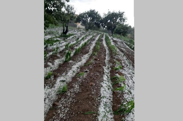 Granizada afecta cultivos de milpa en Atlixco