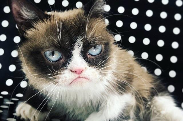 Muere la gatita Grumpy Cat, felina famosa en redes sociales