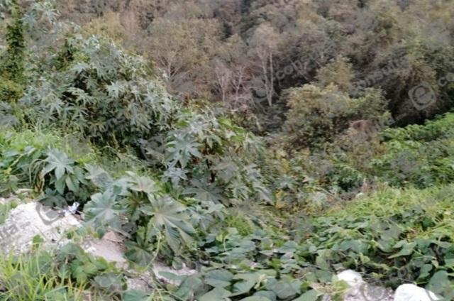 Localizan sin vida a dos mujeres cerca del centro de Zacapoaxtla