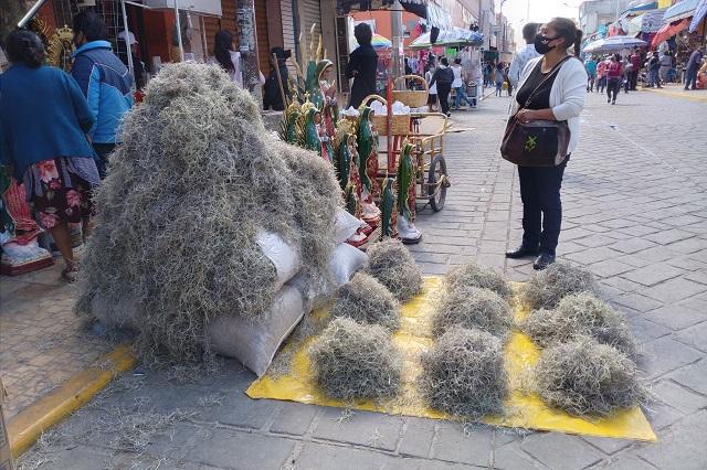 En Tehuacán comercializan especies endémicas por navidad