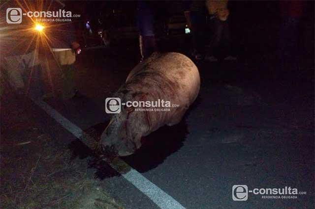 Descabezaron a hipopótamo en Serdán para disecarlo: Profepa