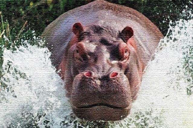 Muere turista que fue atacado por hipopótamo en África