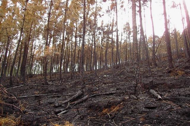 Por delitos ambientales, 676  denuncias penales de Profepa